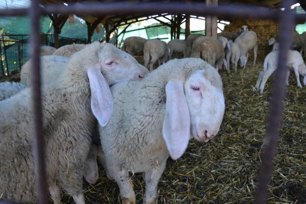 Carne-ovina-senza conservanti
