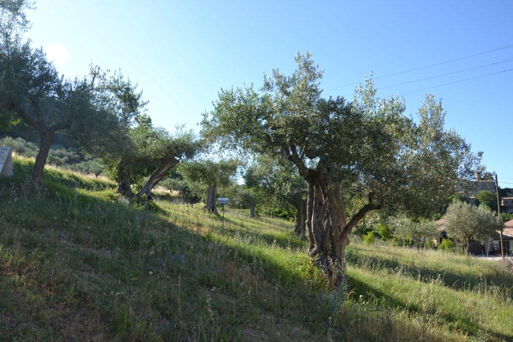 olio-oliva-grezzo